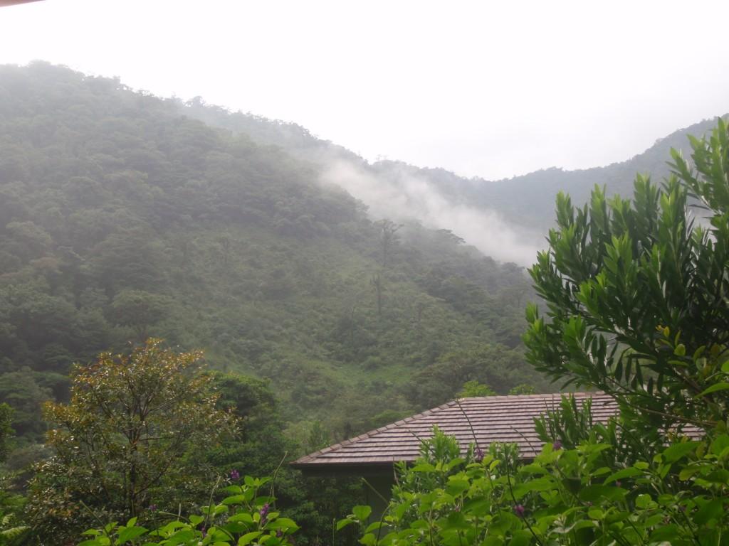 El Silencio Mist