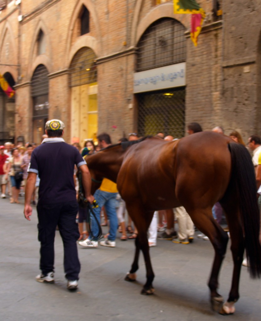 Palio Horse in Siena
