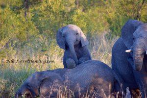 Sabi Sabi Baby Elephant