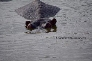 Sabi Sabi Hippo