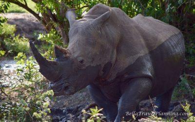 Sabi Sabi South African Safari